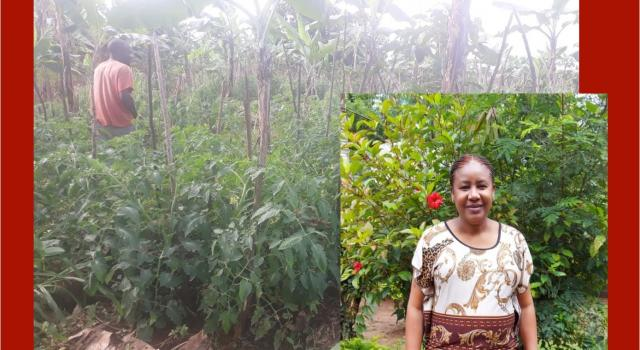A Tanzanian small-stakeholder farmer checks his tomato plants for signs of bacterial wilt.  Hellen Kanyagha, Ph.D.