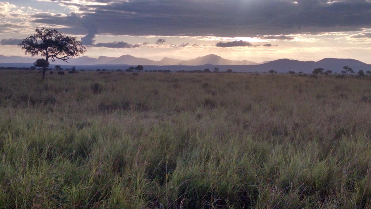 Tanzania's natural vegetation